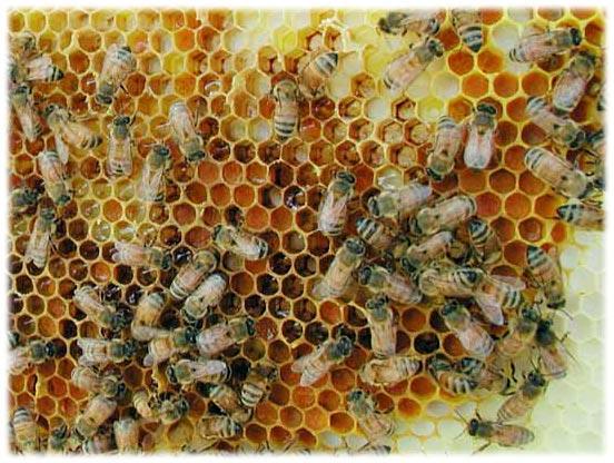 Воск пчелиный