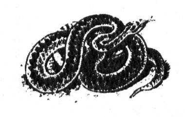 Обыкновенная гадюка